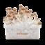 B+ XP   Fresh Magic Mushrooms Grow Kit