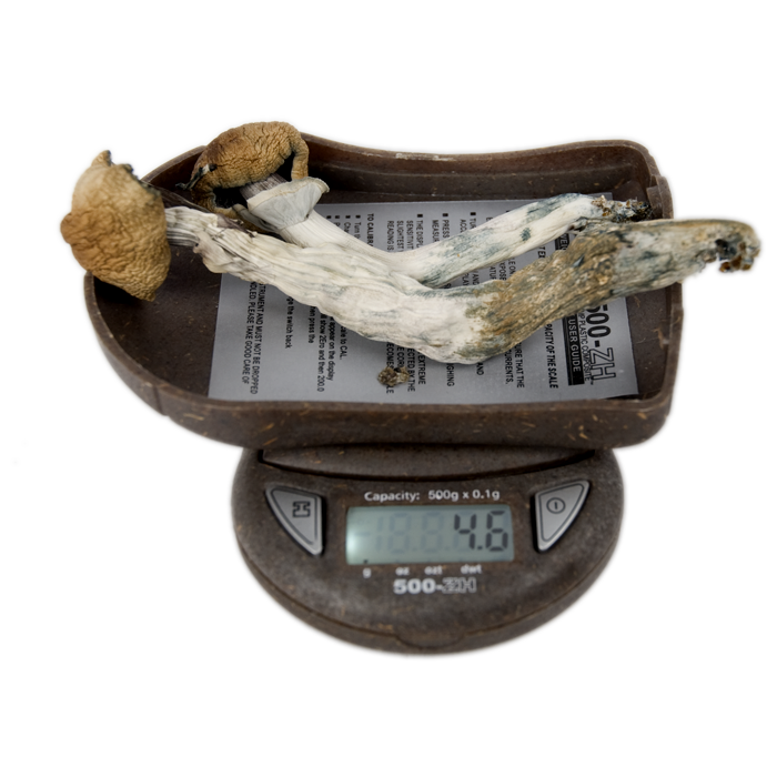 My Weigh 500-zh digital pocket scale mushrooms